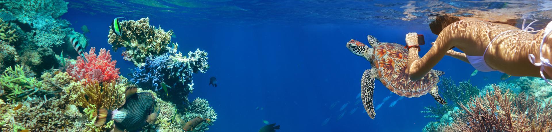 Sonstiges: Tauchen - Korallenriff - Emotion