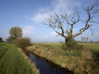 Naturschutzgebiet Werderland - Bremen
