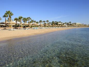 3695+Ägypten+Sharks_Bay+TS_178498738
