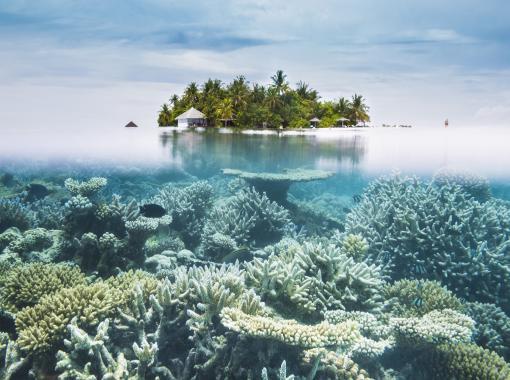 Malediven: Unterwasser - Insel