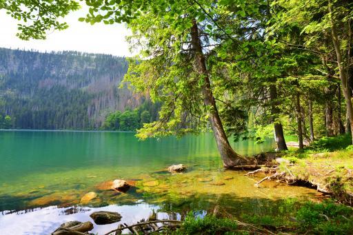 Černé jezero - Zelezna Ruda (Böhmerwald)