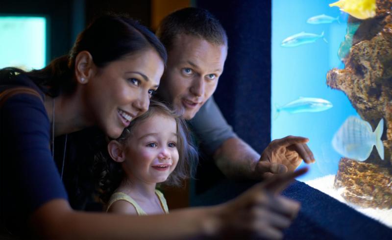 Mallorca für Jedermann - Aquarium Familie