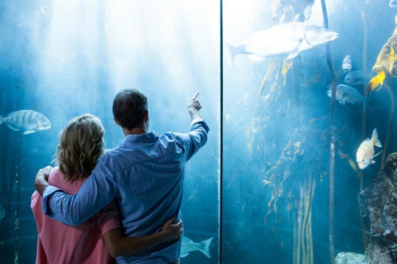 Mallorca fuer Jedermann - Aquarium Paar