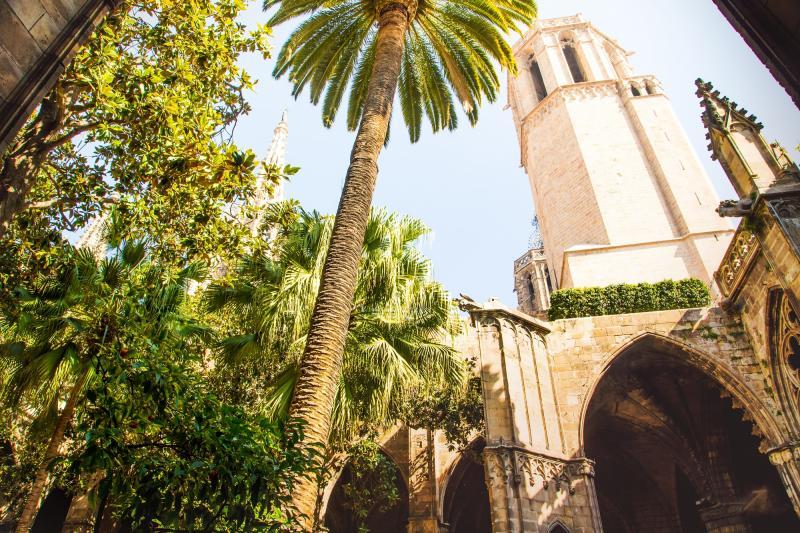 48 h Barcelona: Kathedrale - Innenraum - Palme